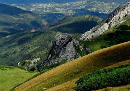 Czerwone Wierchy, tatrzańskie szczyty z unikalną roślinnością
